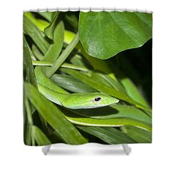 Green Snake Shower Curtain by Greg Reed