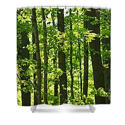 Green Spring Forest Shower Curtain by Elena Elisseeva