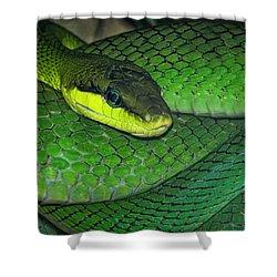 Green Viper Shower Curtain by Joachim G Pinkawa