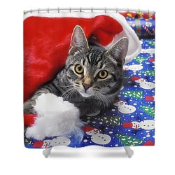 Grey Tabby Cat With Santa Claus Hat Shower Curtain by Thomas Kitchin & Victoria Hurst