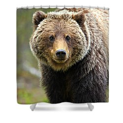 Grizzly Shower Curtain by Stephen Stookey
