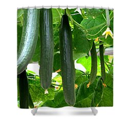 Growing Cucumbers Shower Curtain by Zina Stromberg