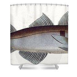 Haddock Shower Curtain by Andreas Ludwig Kruger
