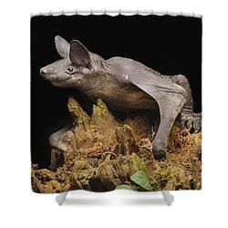 Hairless Bat Tibu Batang Ai Np Malaysia Shower Curtain by Ch'ien Lee
