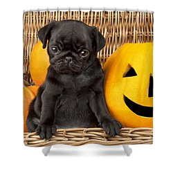 Halloween Pug Shower Curtain by Greg Cuddiford