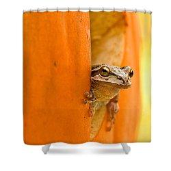 Halloween Surprise  Shower Curtain by Jean Noren