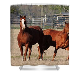 Happy Horses Hoofin-it Shower Curtain by Kim Pate