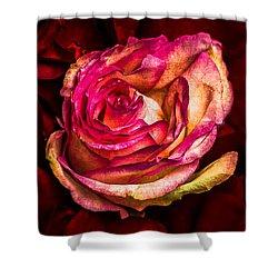 Happy Valentine's Day - 1 Shower Curtain by Alexander Senin