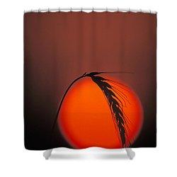 Harvest Sunset - Fs000416 Shower Curtain by Daniel Dempster
