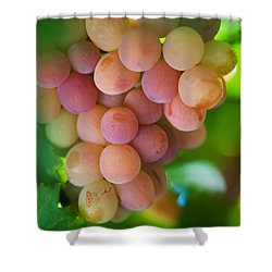 Harvest Time. Sunny Grapes Shower Curtain by Jenny Rainbow