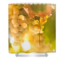 Harvest Time. Sunny Grapes Vi Shower Curtain by Jenny Rainbow