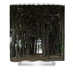 Hawaiian Banyan Tree - Hilo City Shower Curtain by Daniel Hagerman