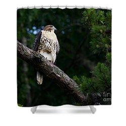 Hawk On Norris Lake Shower Curtain by Douglas Stucky