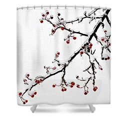 Hawthorn Ice And Snow - D004830 Shower Curtain by Daniel Dempster