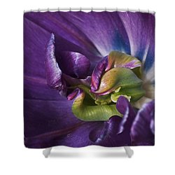Heart Of A Purple Tulip Shower Curtain by Rona Black