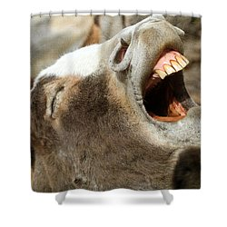 Hee - Haw Shower Curtain by Donna Kennedy