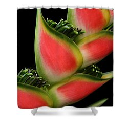 Heliconia Wagneriana - Giant Lobster Claw Heliconiaceae - Maui Hawaii Shower Curtain by Sharon Mau