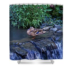 Hen Fall Shower Curtain by Skip Willits