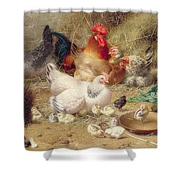 Hens Roosting With Their Chickens Shower Curtain by Eugene Remy Maes