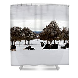 Herd Of Yaks Bos Grunniens On Snow Shower Curtain by Panoramic Images