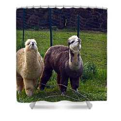 Here Comes Royalty Shower Curtain by Byron Varvarigos