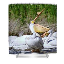 Here Fishy Fishy Fishy  Shower Curtain by Jeff Swan