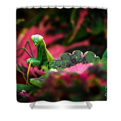 Here I Am Shower Curtain by Robert Bales