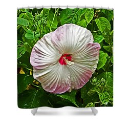 Hibiscus Shower Curtain by Aimee L Maher Photography and Art Visit ALMGallerydotcom