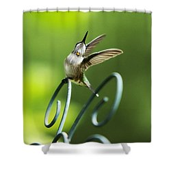 High Spirit Hummingbird Shower Curtain by Christina Rollo