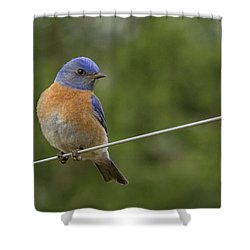 High Wire Shower Curtain by Jean Noren