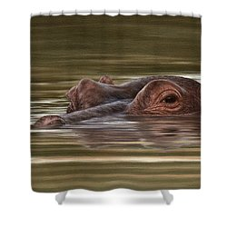 Hippo Painting Shower Curtain by Rachel Stribbling