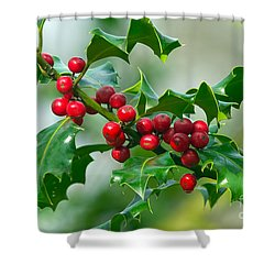 Holly Berries Shower Curtain by Sharon Talson