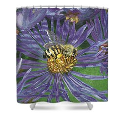 Honeybee On Purple Aster Shower Curtain by Lucinda V VanVleck