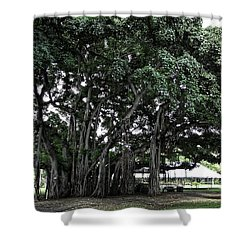 Honolulu Banyan Tree Shower Curtain by Daniel Hagerman