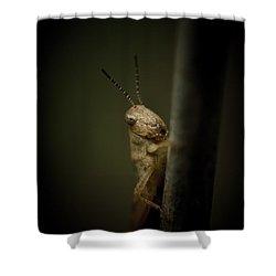 hop Shower Curtain by Shane Holsclaw