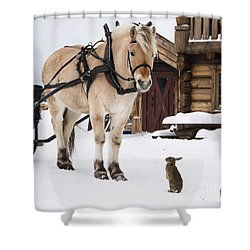 Horse And Rabbits Shower Curtain by Gry Thunes