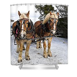 Horse Drawn Sleigh Shower Curtain by Edward Fielding