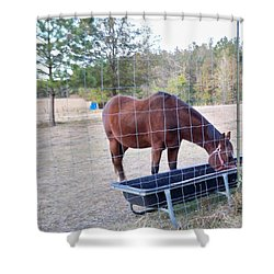 Horse Grazing Shower Curtain by Joseph Baril