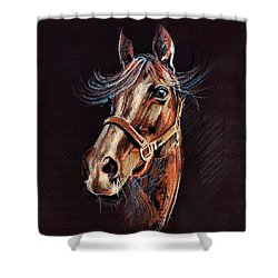 Horse Portrait  Shower Curtain by Daliana Pacuraru