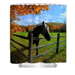 Horse Under Tree By Fence Shower Curtain by Dan Friend