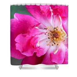 Hot Pink Rose Shower Curtain by Sabrina L Ryan