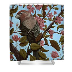 House Finch Shower Curtain by Rick Bainbridge
