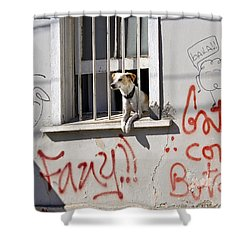 How Much Is That Doggie In The Window? Shower Curtain by Kurt Van Wagner