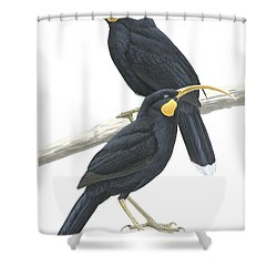 Huia Shower Curtain by Anonymous