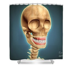 Human Skeleton Showing Teeth And Gums Shower Curtain by Stocktrek Images
