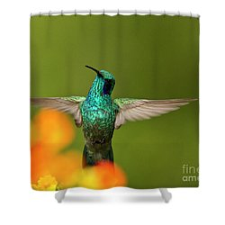 Humming Along Shower Curtain by Heiko Koehrer-Wagner
