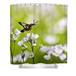 Hummingbird Clearwing Moth Flying Away Shower Curtain by Christina Rollo