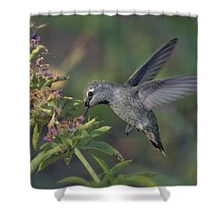 Hummingbird In The Morning Light Shower Curtain by Saija  Lehtonen