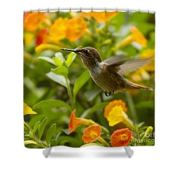 Hummingbird Looking For Food Shower Curtain by Heiko Koehrer-Wagner