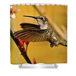 Hummingbird Shower Curtain by Robert Bales